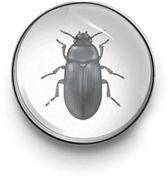 Darkling beetle icon
